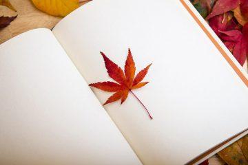 להפוך רעיונות למילים עם קורס כתיבה יוצרת