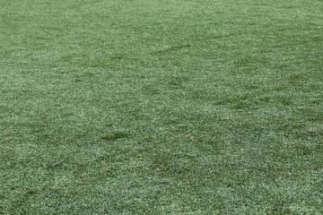 מה עדיף: דשא סינטטי או דשא חי?